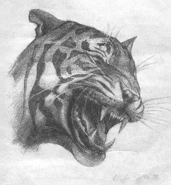 Юлия Ратникова: Tiger big