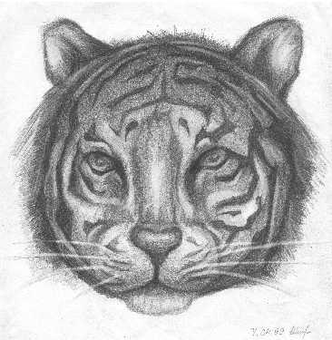 Юлия Ратникова: Tiger little